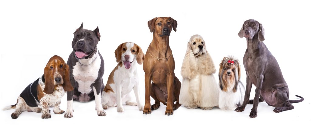 Doogies Doggie Daycare group of well groomed dogs