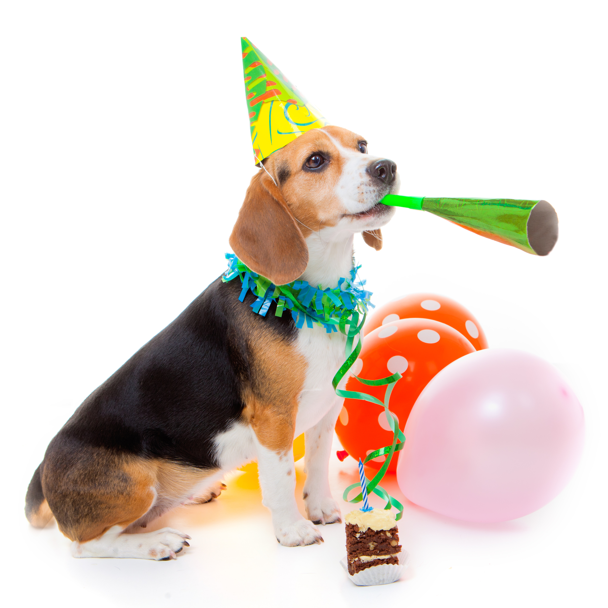 Dog parties at Doogies Doggie Daycare and Spa of Tomah WI